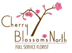Cherry Blossoms North